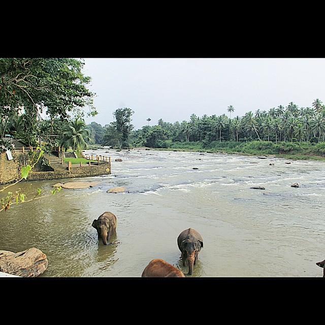 Entire River
