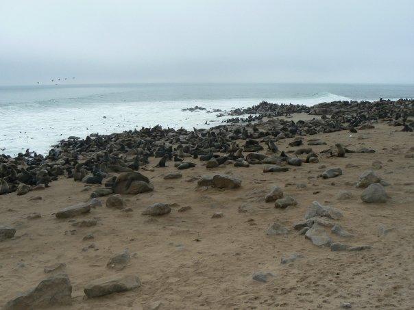 Even More Seals